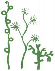 sjögräsliten